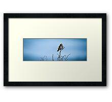Bird at The Beach Framed Print