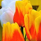 Life is All About Tulips by Cee Neuner