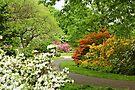 Azalea Gardens - Philadelphia - Pennsylvania - USA by MotherNature