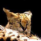 Sleeping Serval by Barnbk02