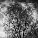 Neural Network - Black Edition (iPhone wallet) by Matti Ollikainen