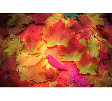 Fall Finest Photographic Print