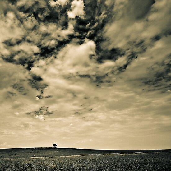 tiny single tree by Victor Bezrukov