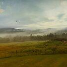 On the Farm  by John Rivera