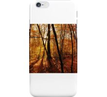 Golden forest in the sunshine iPhone Case/Skin