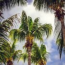 Palm Trees Standing Tall by Jonicool