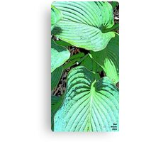 Guacamole Hosta Canvas Print