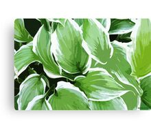 Albo Marginata Hosta Canvas Print