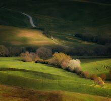 Inpression with trees by JBlaminsky