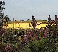 Evening golden fields by sarnia2