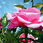 Gorgeous pink rose in blue sky. Floral photography. by naturematters