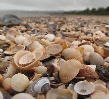 Along the seashell beach by KMorral