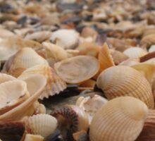 Along the seashell beach Sticker