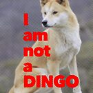 Tom Wheeler is a Dingo by redandy