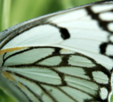 """The grass is my home... """"Brown-veined White butterfly"""" (Belenois aurota) Free State, South Africa Sticker"""