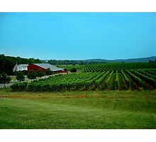 Barboursville Vineyards - Smalltown USA Series   ^ Photographic Print