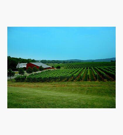 Barboursville Vineyards - Smalltown USA Series   ^ Photographic Print