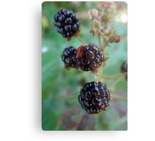 Berry berry nice Metal Print