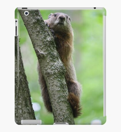 Groundhog in a Tree iPad Case/Skin