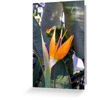 Orange Bird of Paradise flower Greeting Card