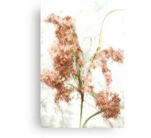 Wild Indian Rice in Autumn Canvas Print
