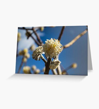 Sunny blossom Greeting Card