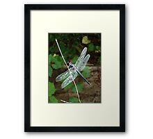 SLATY DRAGONFLY ON SILVER WINGS Framed Print