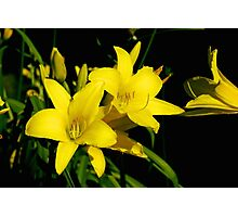 Lillies Photographic Print