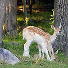 Beautiful Baby Deer by vette