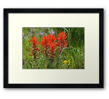 Indian Paint Brush Framed Print