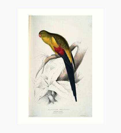 Beautiful Blacktailed Parrot Print Art Print