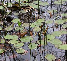 Acadia Botanical Garden 1 by marybedy