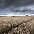 Stormy Cornfields by Ian Hufton