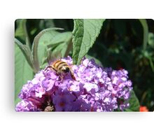 Excellent Detail Bee on Buddleia Canvas Print