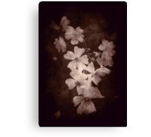 Where the wild roses grow ... Canvas Print