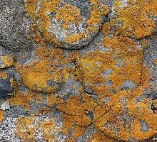 Lichen Covered Fence Post by marybedy