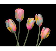 Psychedelic Tulips Photographic Print
