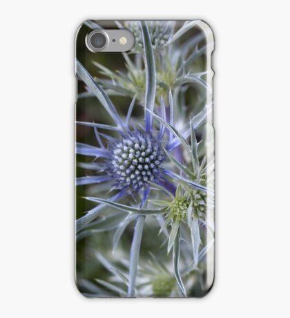 Amethyst eryngo (Eryngium amethystinum) iPhone Case/Skin