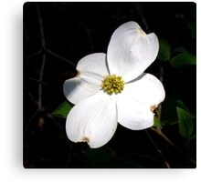 Welcoming Spring - Dogwood Canvas Print