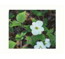 Welcoming Spring - Dogwood 2 Art Print