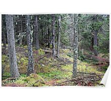 Bass Harbor Forest Poster