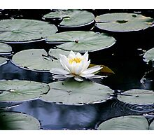 White Water Lilly Photographic Print