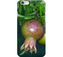 Green pomegranate fruit (Punica granatum) on a tree. iPhone Case/Skin