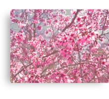So Much Pink! Canvas Print