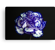 Carnation Portrait 2 Canvas Print