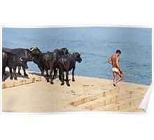 Going for a dip. Poster