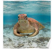 Turtle yoga pose Poster