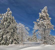 Winter Blues by Lois  Bryan