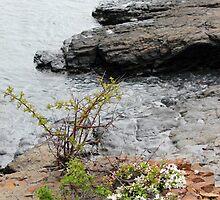 Maine Shoreline 3 by marybedy
