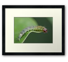 Caterpillar Resting Framed Print